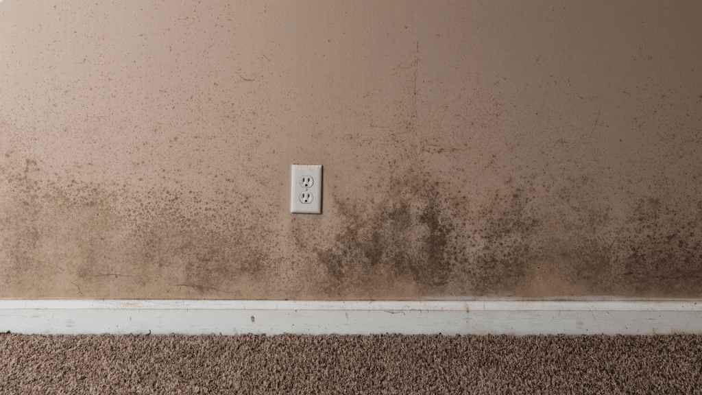 Mold Growth In Foundation